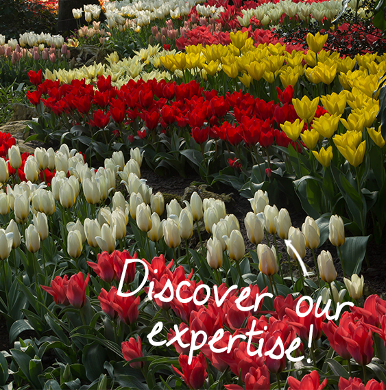 expertise-ruigrok-flowerbulbs
