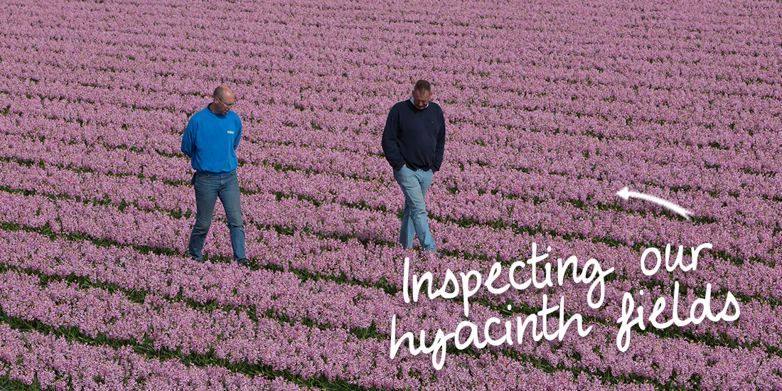 inspecting-our-hyacinth-fields