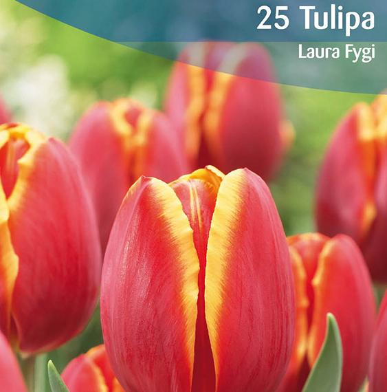 tulipa-ruigrok-flowerbulbs-value-pack