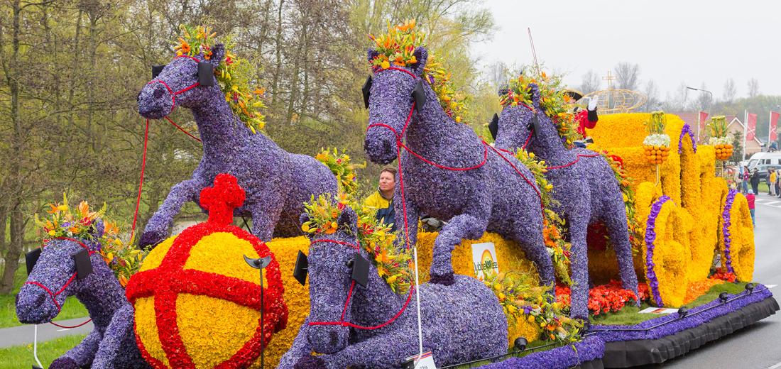 Fragant Parade Ruigrok Bulbs