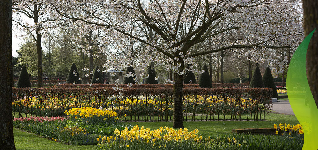 Visit flower shows in Keukenhof