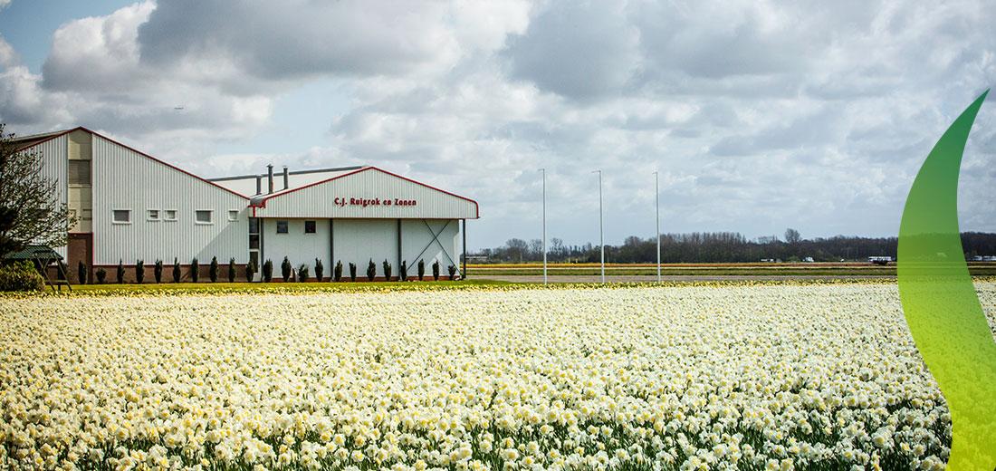 170330 Spring RuigrokFlowerbulbs 1