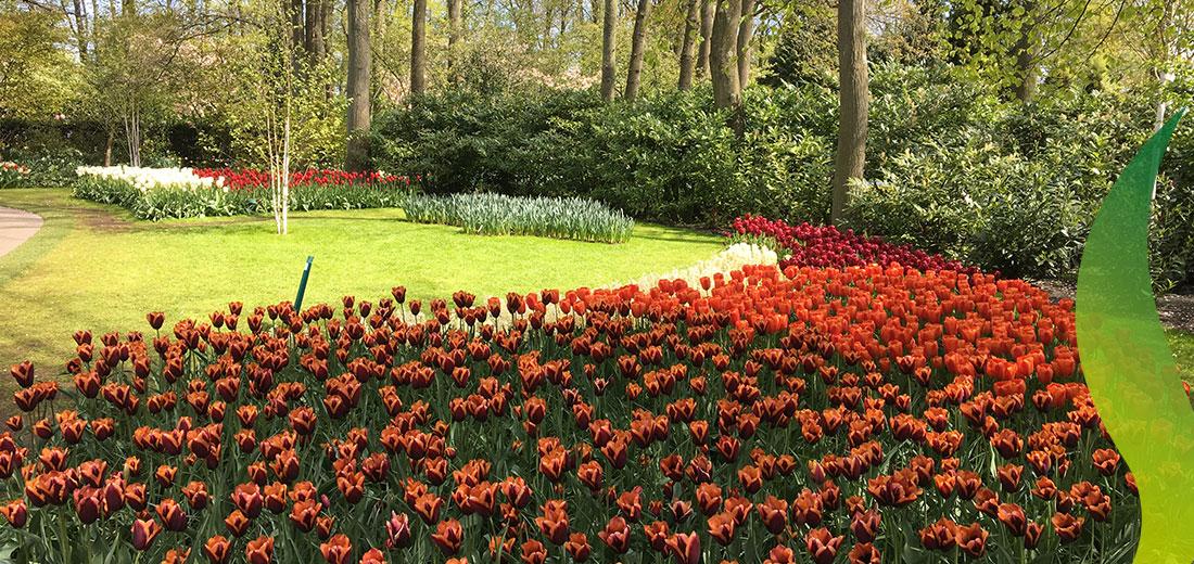 SlaWa Ruigrok Flowerbulbs