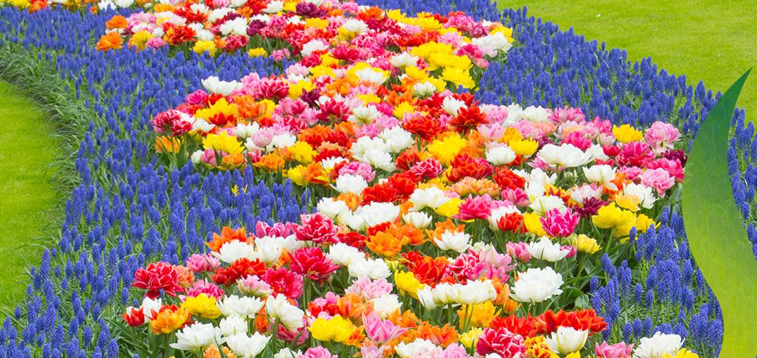Pantone Ruigrok Flowerbulbs