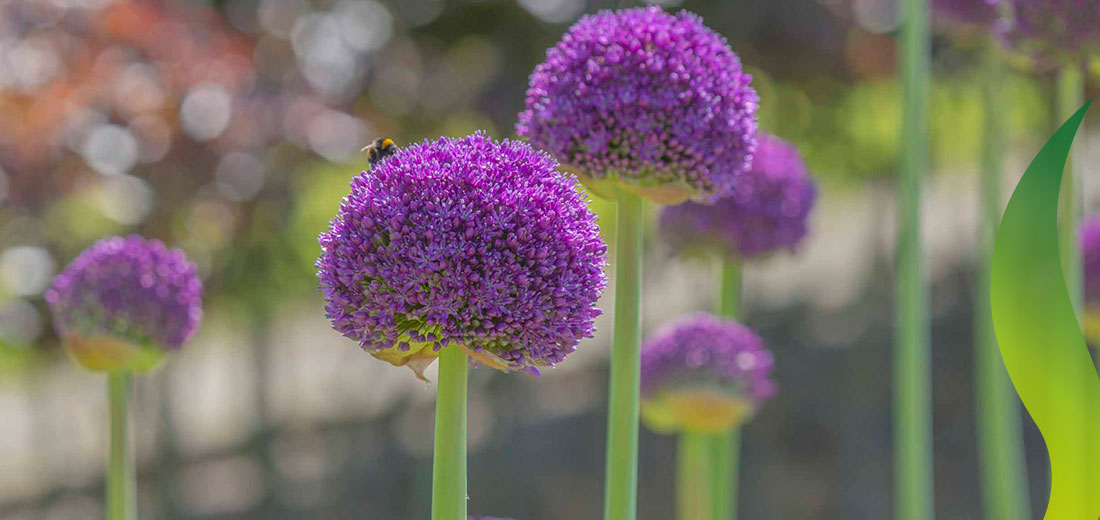 Flora en fauna Ruigrok Flowerbulbs