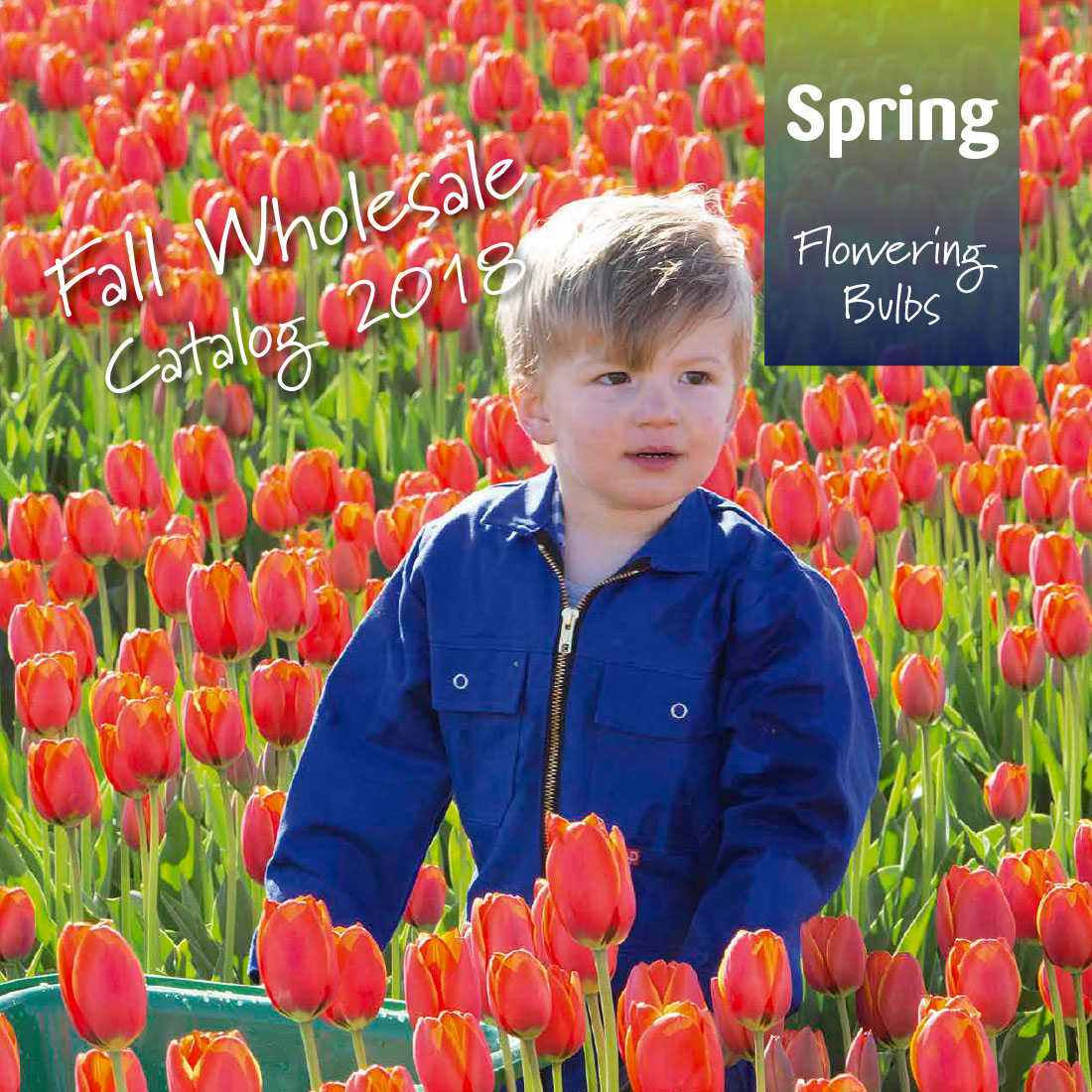 Fall Wholesale 2018 Ruigrok Flowerbulbs