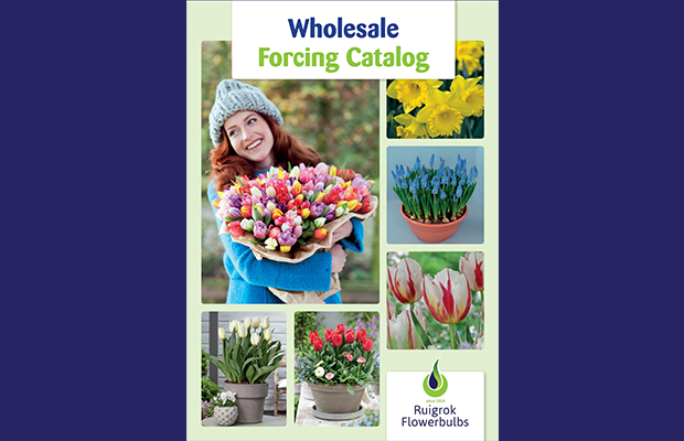 Wholesale Forcing catalog